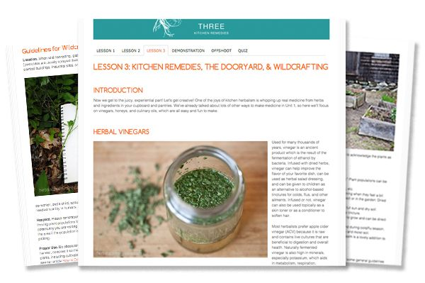 Online Introductory Herbal Course - herbalism education from Herbal Academy of New England