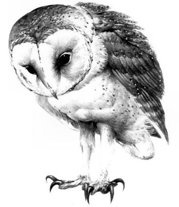 1000 ideas about owl tattoo design on pinterest owl for Owl fish store