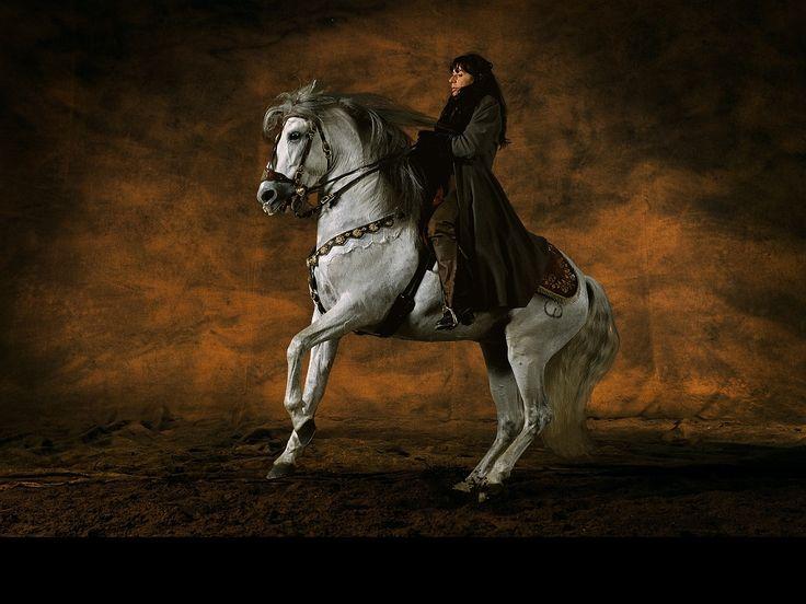 fond d cran gratuit t l charger download free wallpaper cheval pure race espagnole