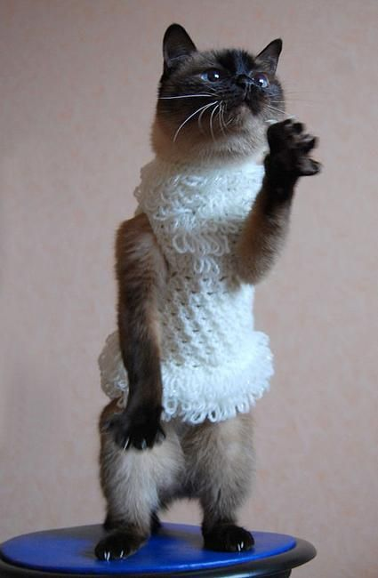 86 best Knitted & Crocheted Cat Outfits images on ...