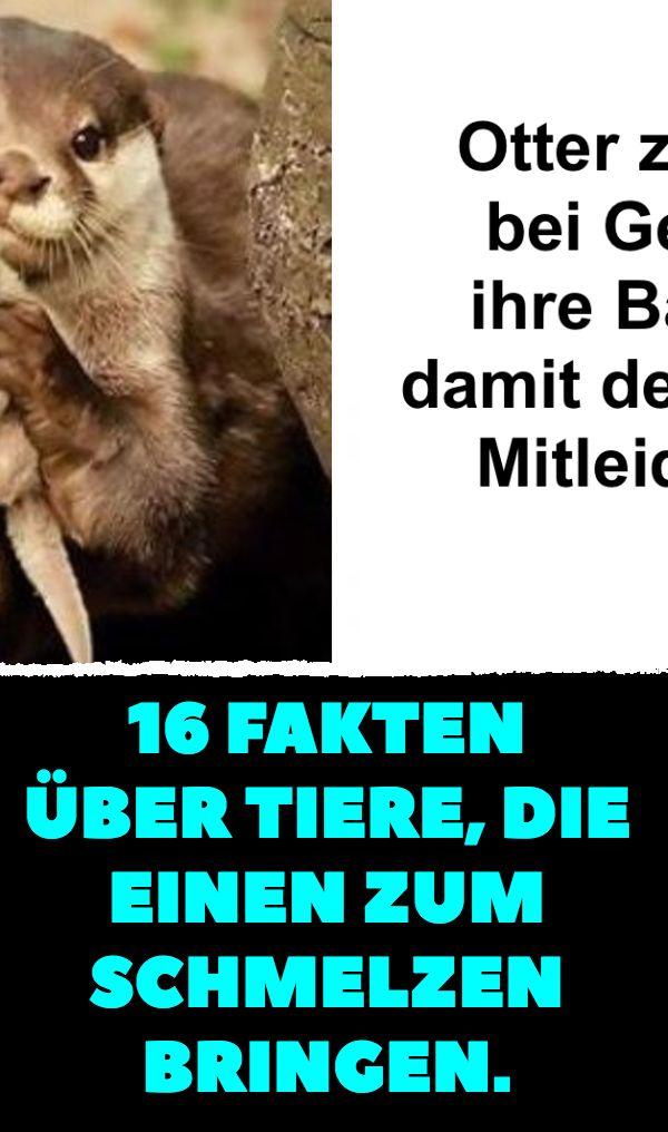 Fakten über Tiere