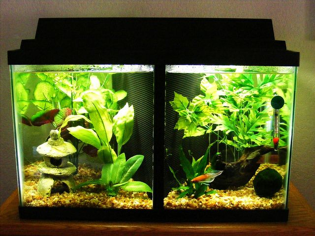 Best 25 10 gallon fish tank ideas on pinterest biorb for 2 gallon betta fish tank