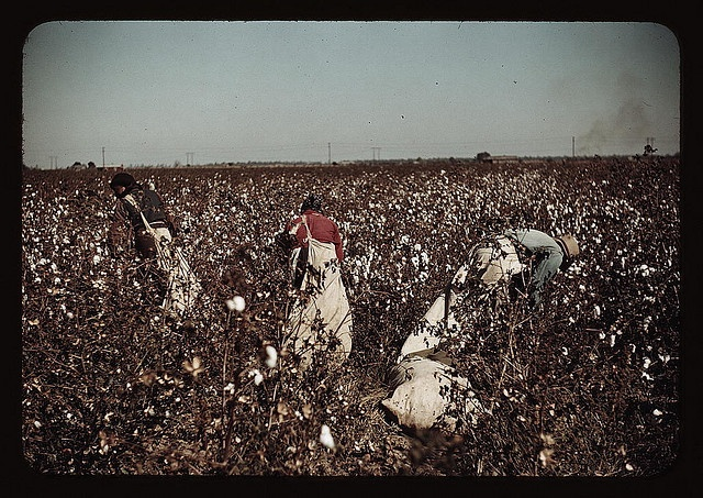 Day-laborers picking cotton near Clarksdale, Miss. (LOC)    Wolcott, Marion Post,, 1910-1990,, photographer.    Day-laborers picking cotton near Clarksdale, Miss.    1939 Nov.