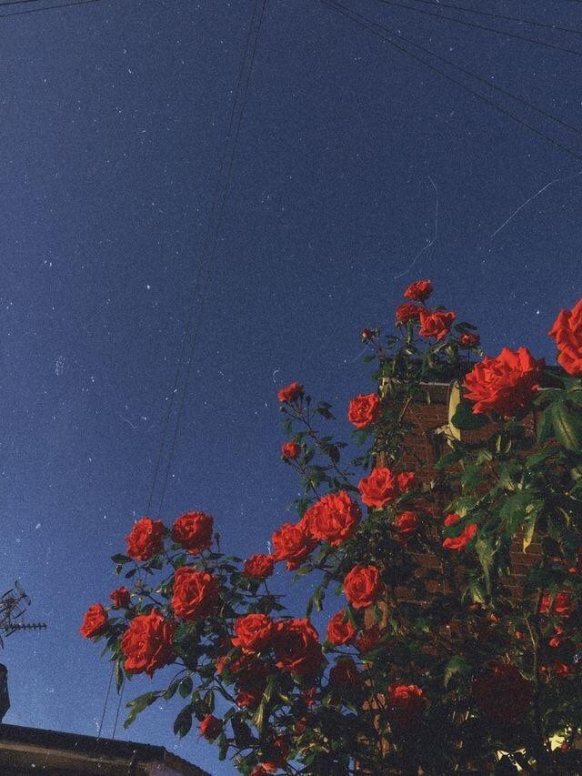 Aesthetic Sky Art Flowers Beauty Nature Vintage Tumblr