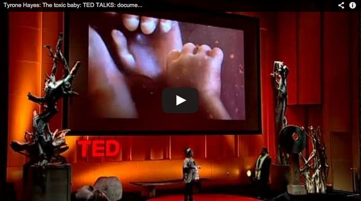 The Toxic Baby (Must Watch TED Talk)