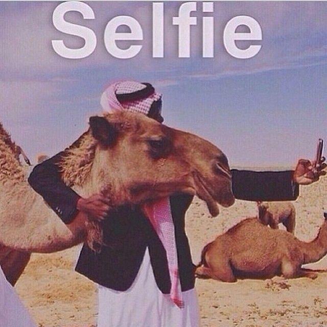 a5c6e79aec34e416d0cfc7110036a62e camels selfie 118 best muslim memes ☺ images on pinterest funny stuff, muslim,Funny Arab Meme Airplane