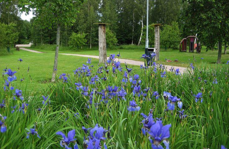 Iirikset kukkivat Tilkanniityn veistospuistossa [Elina Nummi]