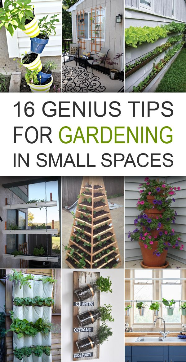 16 Genius Tips For Gardening In Small Spaces