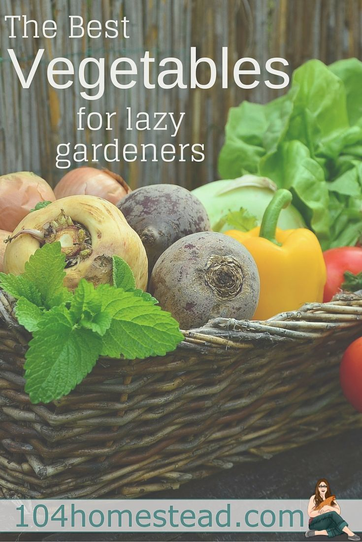 There's nothing like vegetables fresh from the garden, but not all of us have the time or energy it takes to stay on top of garden upkeep.