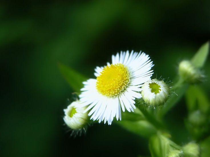 Best Nature Flower Wallpaper 5926 Full HD Wallpaper Desktop - Res ...