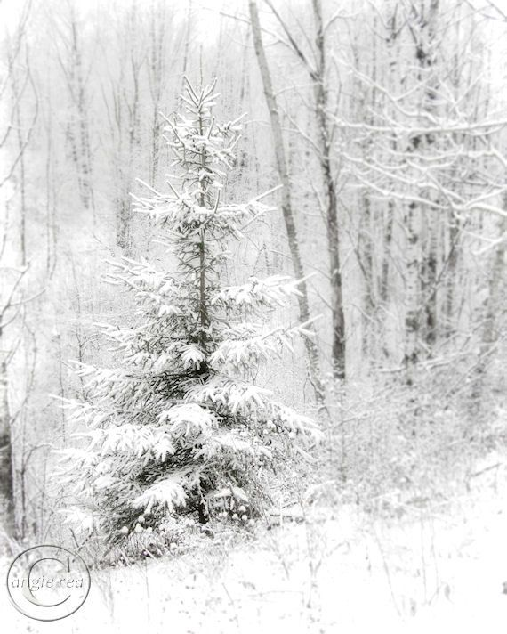 Whispers the Snow Winter White Tree Print 8 X 10 White, Soft Falling Snow on Evergreen Tree