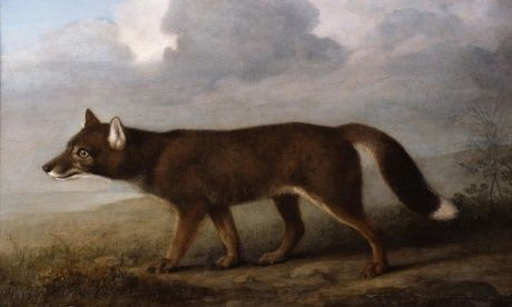 George Stubbs' Portrait of a Large Dog - 1773  (actually a Dingo- although Stubbs never set foot on Australian soil - and painted this from the sketches of an artist who had died on the voyage back to Britain. This, along with a painting of a kangaroo by Stubbs are the first painted depictions of Australian animals by a western artist.