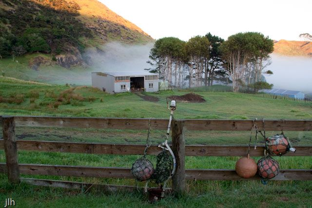 A summer's morning and all is still on a Farm in the Far North of  New Zealand. The buoys in the foreground and the fog in the background hint that the coast is not far away.