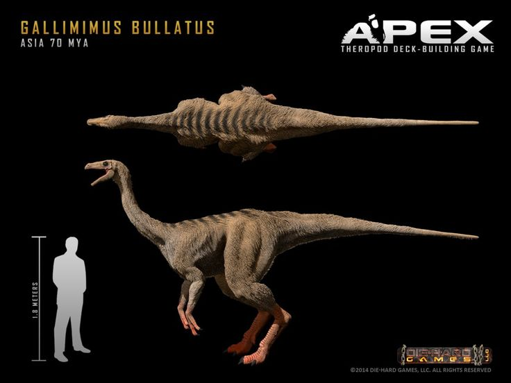 Gallimimus Bullatus by Herschel-Hoffmeyer on deviantART