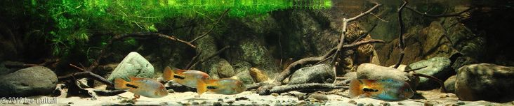 2012 AGA Aquascaping Contest First Place Biotope by Lee Nuttall, United Kingdom