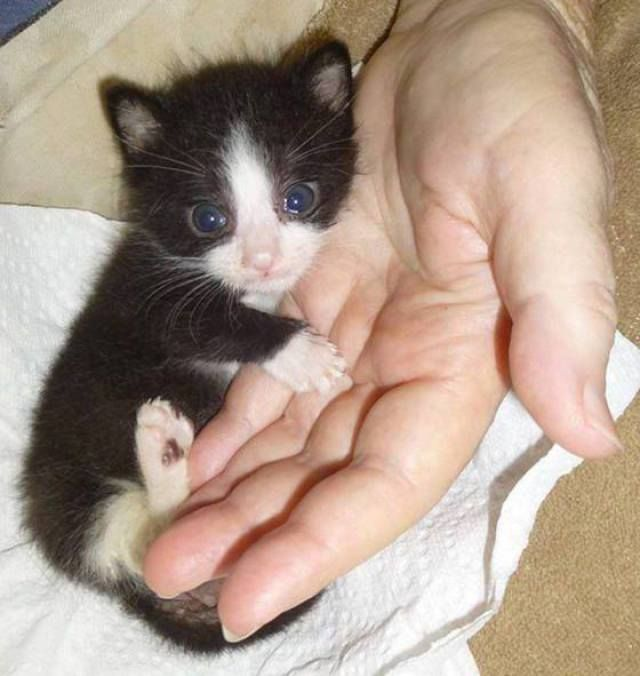 Awww, teeny tiny kitten!