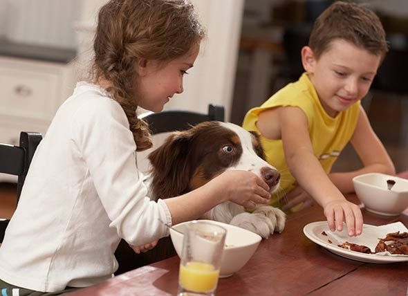 Is People Food Bad for #Dogs? #pethealth