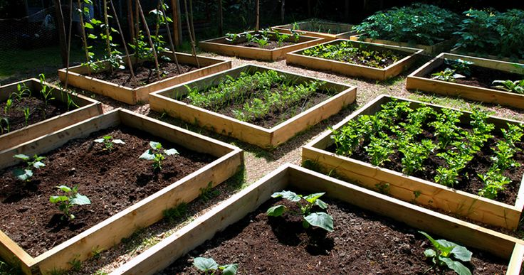 Tomatomania Vegetable Garden Design with Stephen Baldonado