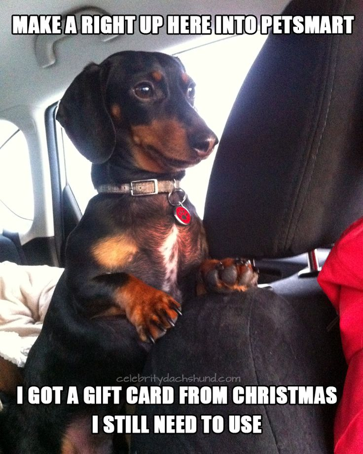 A Dachshund's New Year's Resolutions |