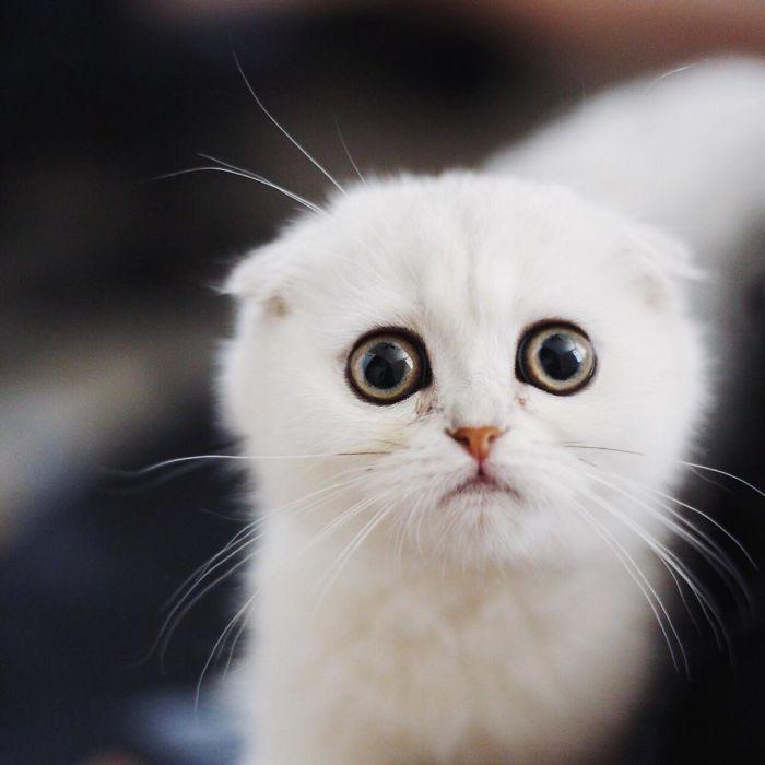 интернет-ресурсы, картинки с умоляющими котиками мусс