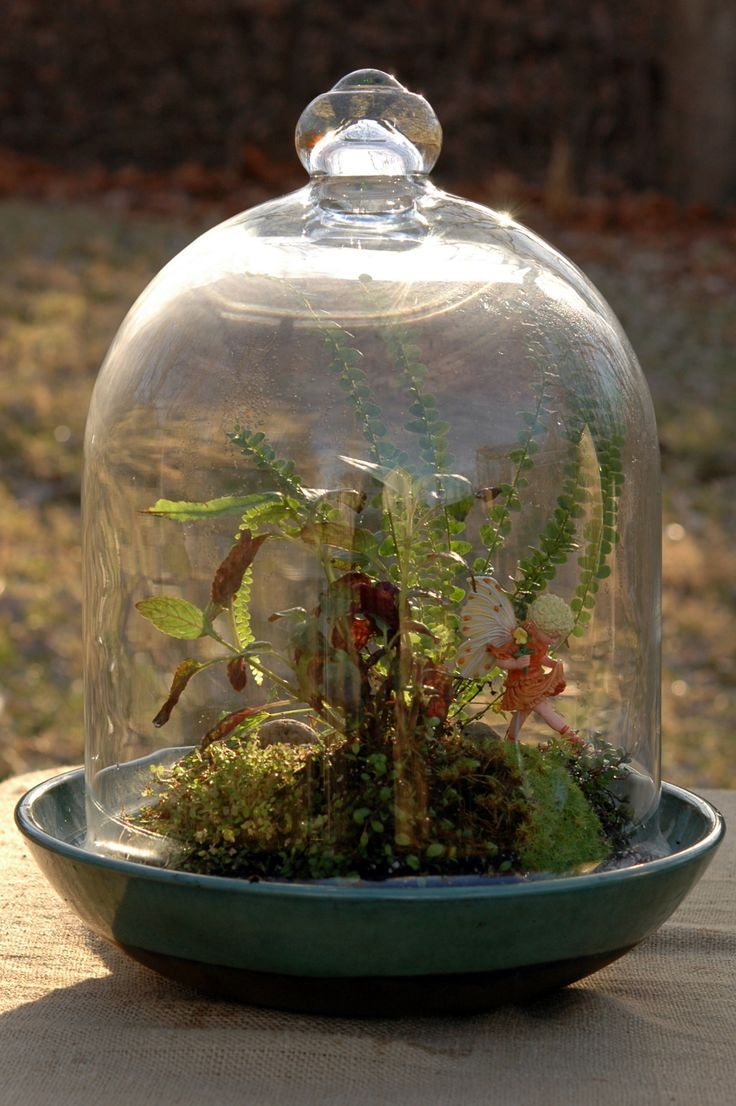 181 Best Cloches Domes And Terrariums Images On Pinterest