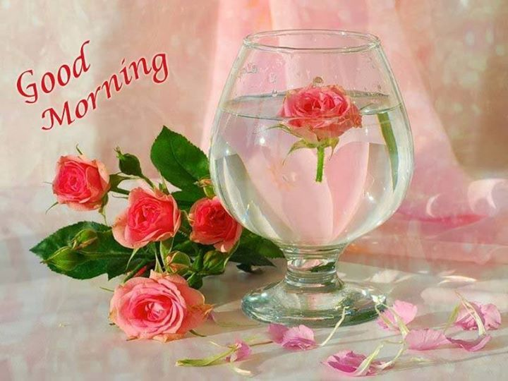 Good Morning Beautiful Pink Roses : Good morning friends have a nice day visit http bit ly