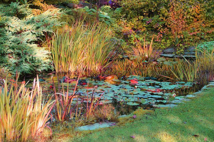 15 best pond images on pinterest pond covers pond for Winter pond plants