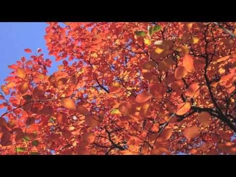 Dlaczego jesienią spadają liście? - YouTube