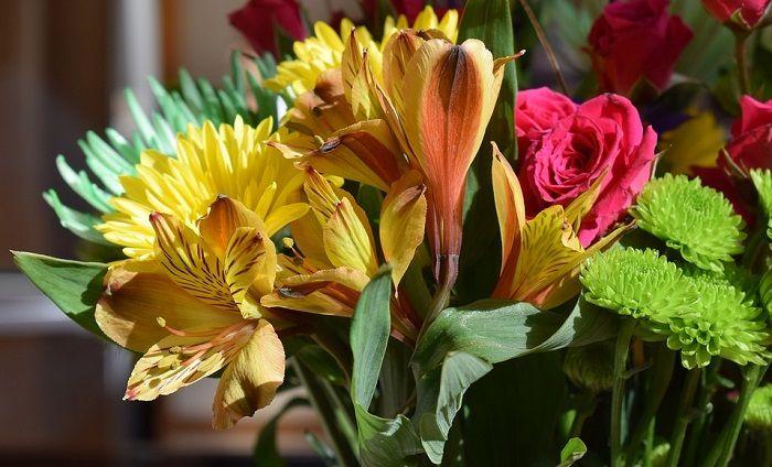 Alstroemeria Flower Devotion Support Following Your Dream Survival Friendship Flower Meanings Alstroemeria Flowers