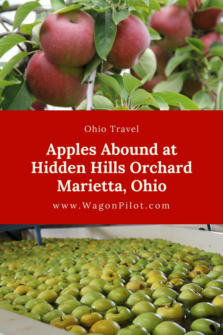 Apples Abound at Marietta's Hidden Hills Orchard