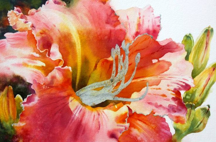 Susan Crouch WatercolorsLiked · Yesterday Day 5/daylily demo - Adding some buds now. They are painted in layers, followed by a little lifting - similar to how the petals were handled. I love the rim of light running along the ruffles' edges. Starting to remove the thin line of masking from ruffles' edge now, then softening a bit with Cheap Joe's fritch scrubber brush. (demo series began Jan. 23 - see my FB page