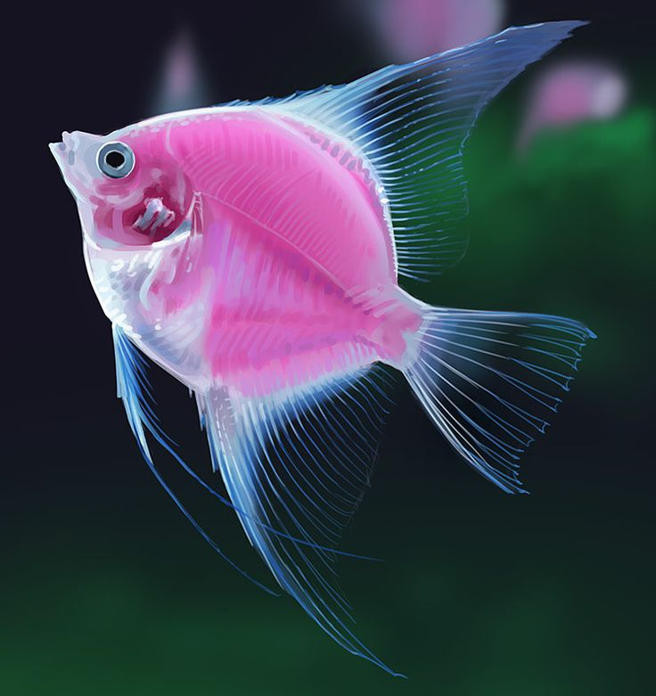 17 best images about cool fish on pinterest lobsters for Cool pet fish