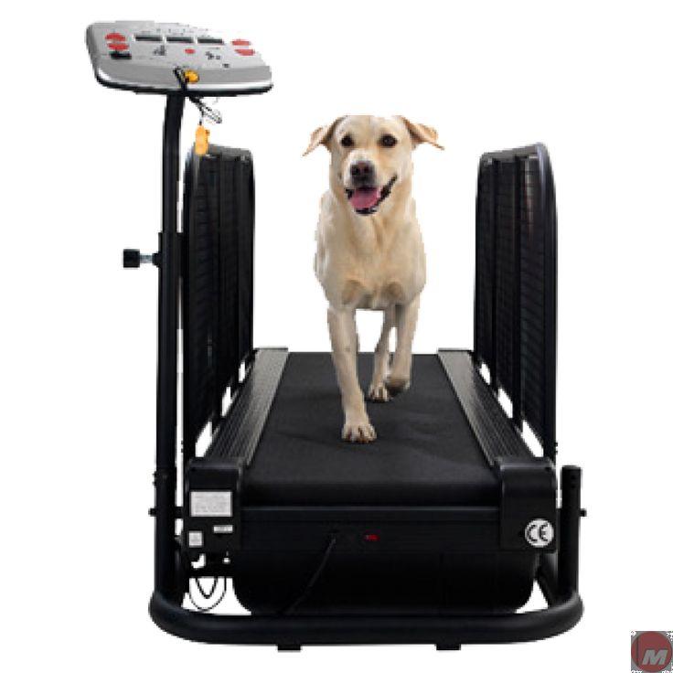Dog Treadmills For Sale Ebay