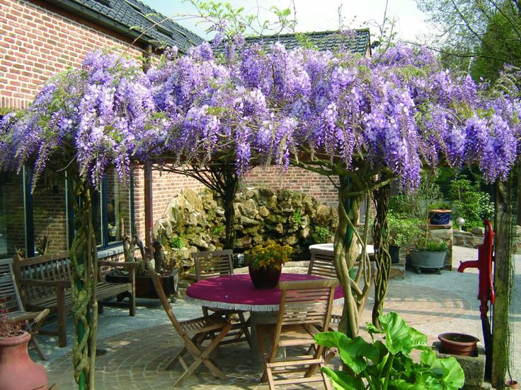 32 best images about wisteria on pinterest gardens lilacs and wisteria - Pergola klimplant ...