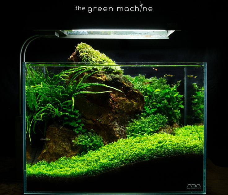 The 25+ Best Aquascaping Ideas On Pinterest | Aquarium, Aquarium Ideas And  Plant Fish Tank