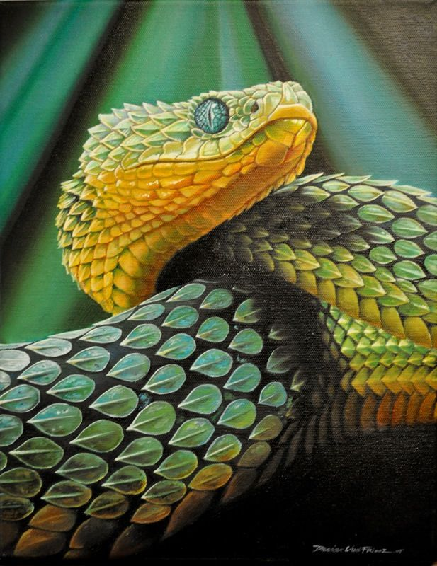 Painting of an African bush viper
