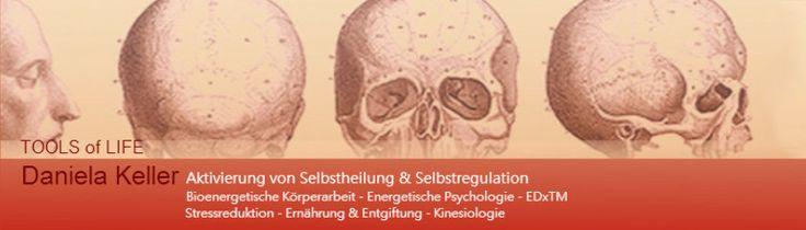 Ernährungs- und Entgiftungsbegleitung: kinesiologische Testung von Allergien,Umwelt- und Zahngiften
