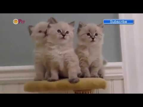 Funny Cats   Funny vines   Funny Video   Funny Animals Videos