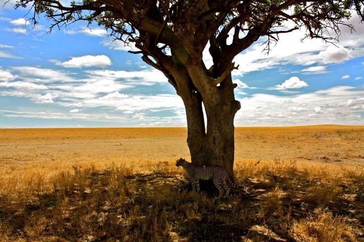 Lucky shot Jimmy - Serengeti - Tanzania