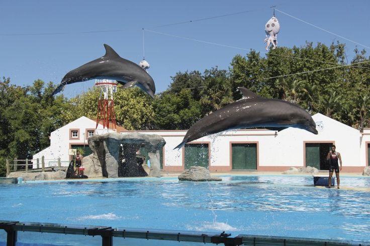 Lissabon, dag 2: Tæt på dyrene i Zoologisk have og Aquarium - Opdagelse.dk