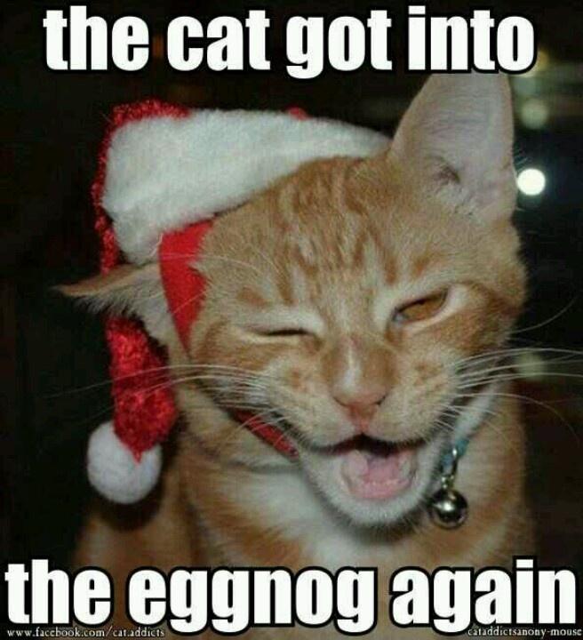 Cat got into eg... Funny Lyrics To Christmas Songs