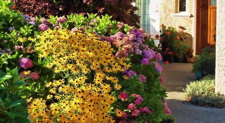 Цветник в августе украсит рудбекия: лучшие виды — Мир Растений