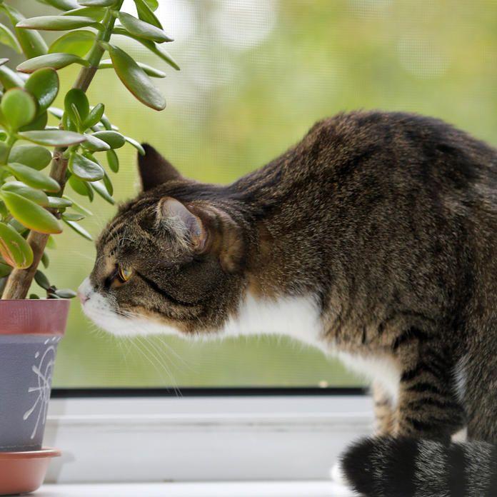 die 5 giftigsten zimmerpflanzen f r katzen katze giftige zimmerpflanzen f r katzen katzen. Black Bedroom Furniture Sets. Home Design Ideas