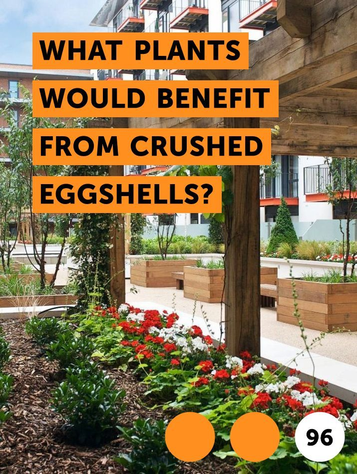 Learn What Plants Would Benefit From Crushed Eggshells How To Guides Tips And Tricks Plants Growing Plants Garden Flowers Perennials