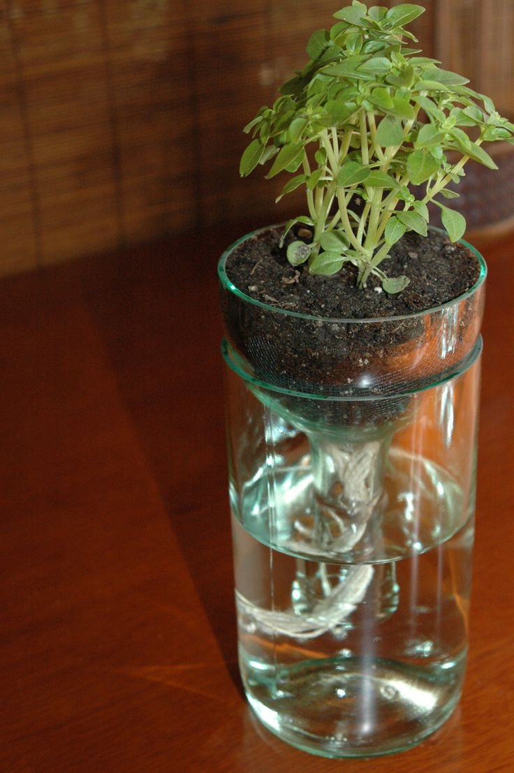 self watering planter made from recycled wine by minoakastudios, $20.00