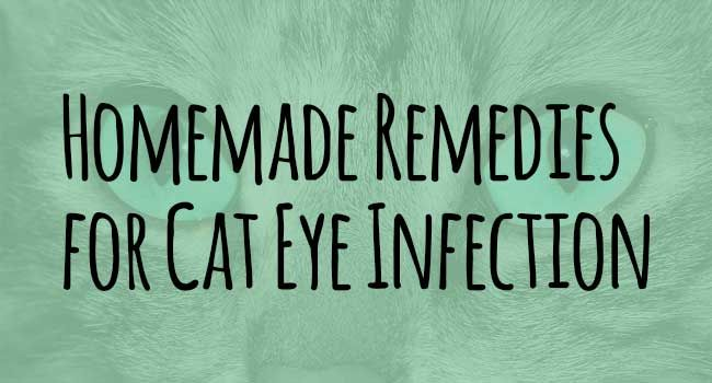 In this article, you'll learn the homemade easy-to-make remedies to solving cat eye infection.