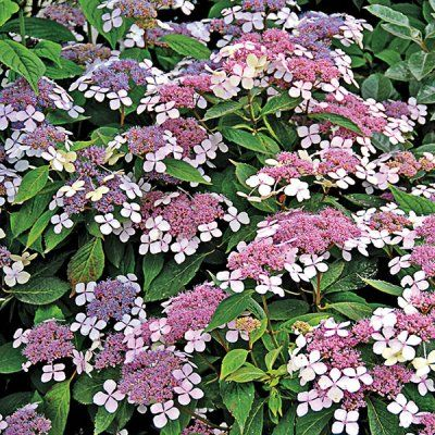 17 best ideas about fast growing shrubs on pinterest privacy landscaping fast growing trees - Nature curiosity stressed out plants emit animal like signals ...