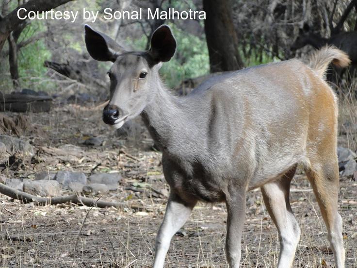 Ranthambore National Park: National Parks, Sonal Malhotra