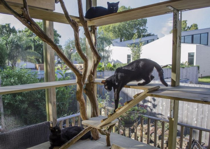 Some cat patios are simple window boxes with a view; others are as big as screened-in porches.