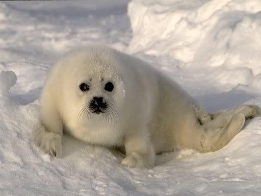 dieren in de sneeuw - Google zoeken